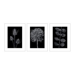 Tranh IKea - TRILLING (Poster, set of 3)